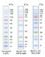 Gangnam Stain Prestained Protein Ladder Ready To Use
